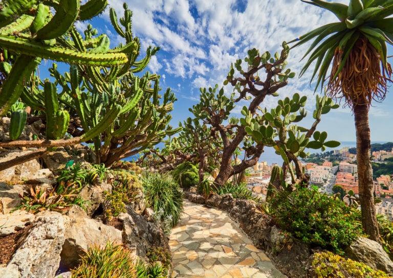 Descubre el hermoso Jardín exótico de Mónaco