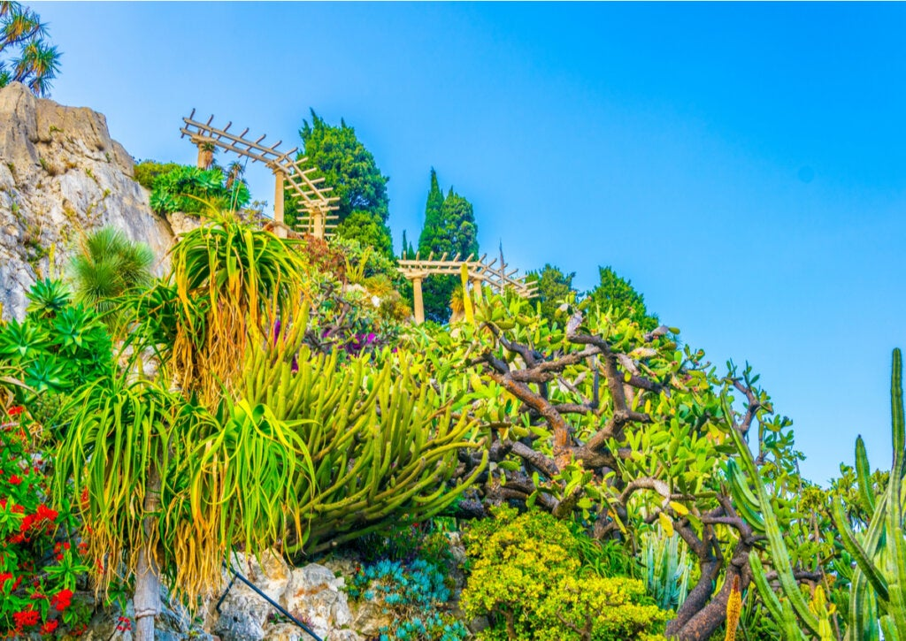 Plantas suculentas ubicadas en el Jardín Exótico de Mónaco.