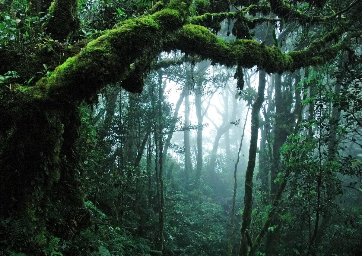 La sima de Sarisariñama apenas fue explorada en la década del sesenta.