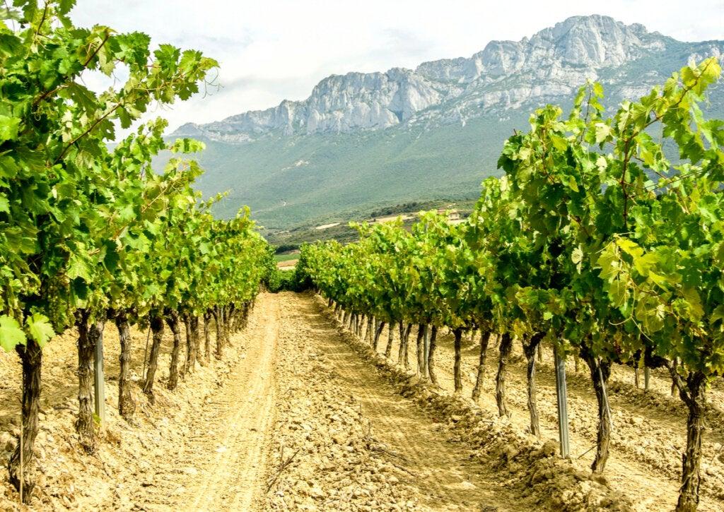 Un viaje por la ruta del vino de la Rioja Alavesa