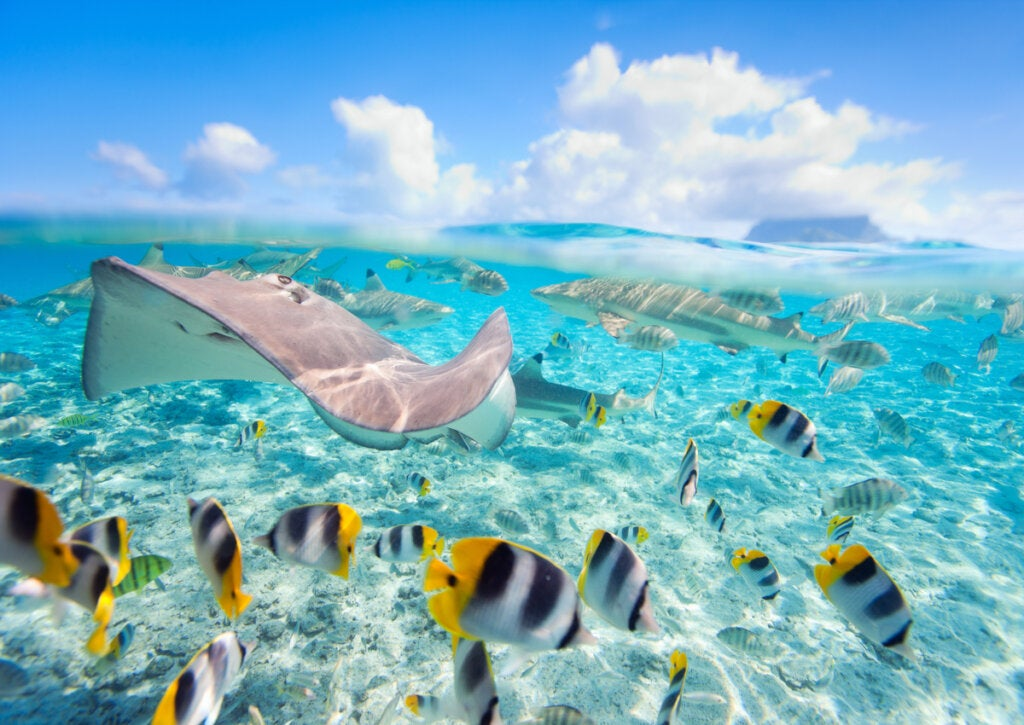 La laguna de Bora Bora ofrece una vida marina impresionante.