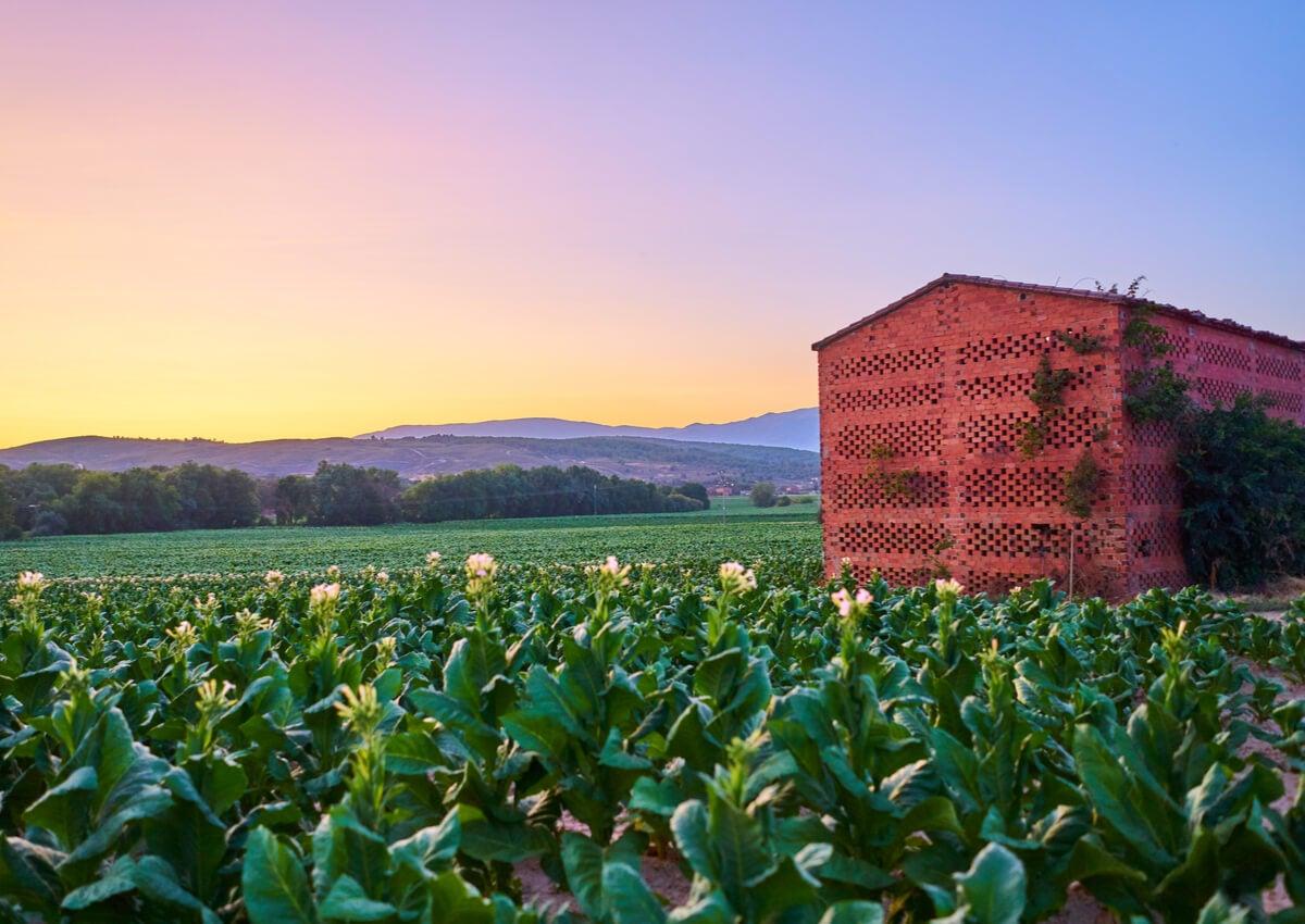 Los secaderos de tabaco de La Vera y sus peculiares usos