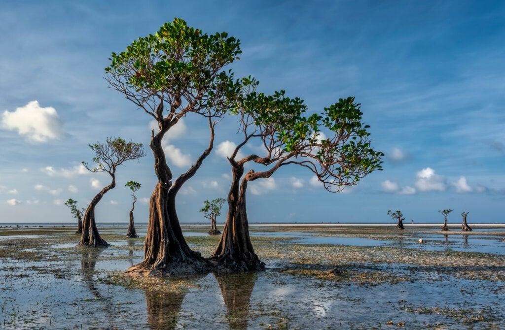 Los manglares dan un color distinto a Walakiri Beach.
