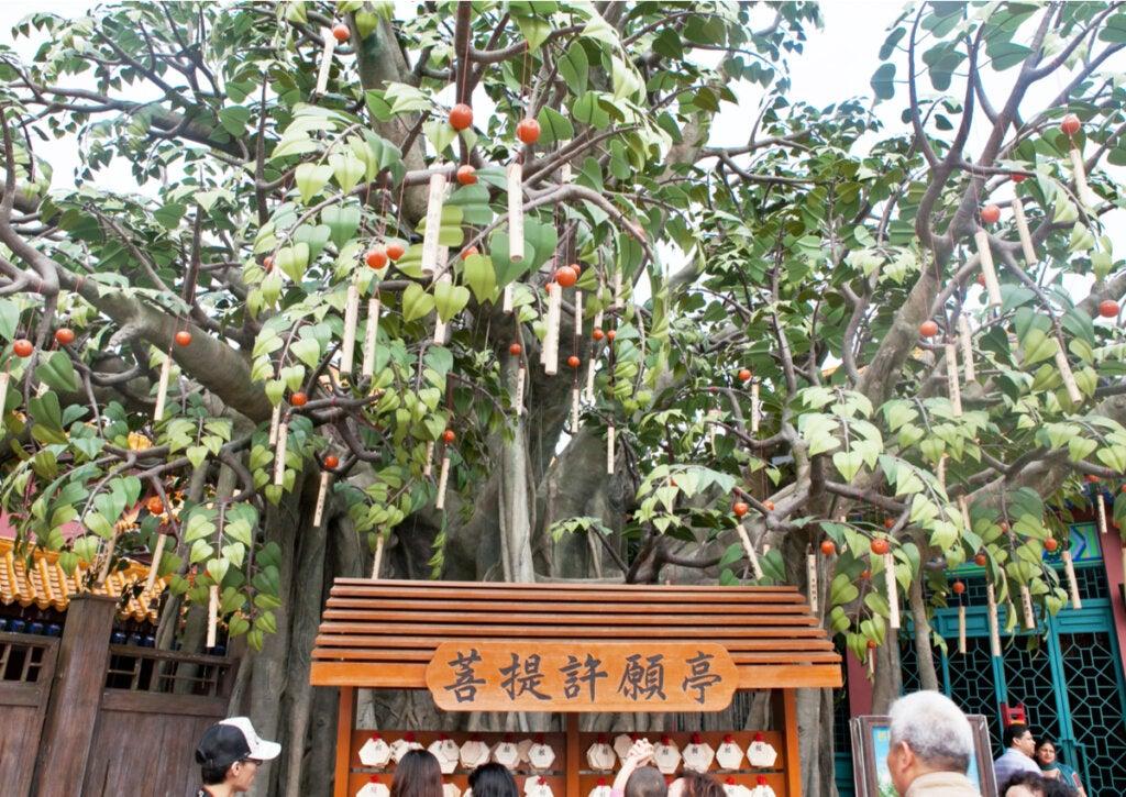 En Ngong Ping, los turistas cuelgan sus carteles de deseos en el gran Bodhi.