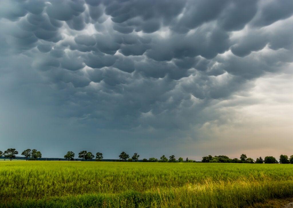 Las nubes mammatus se dan junto con fenómenos peligrosos.