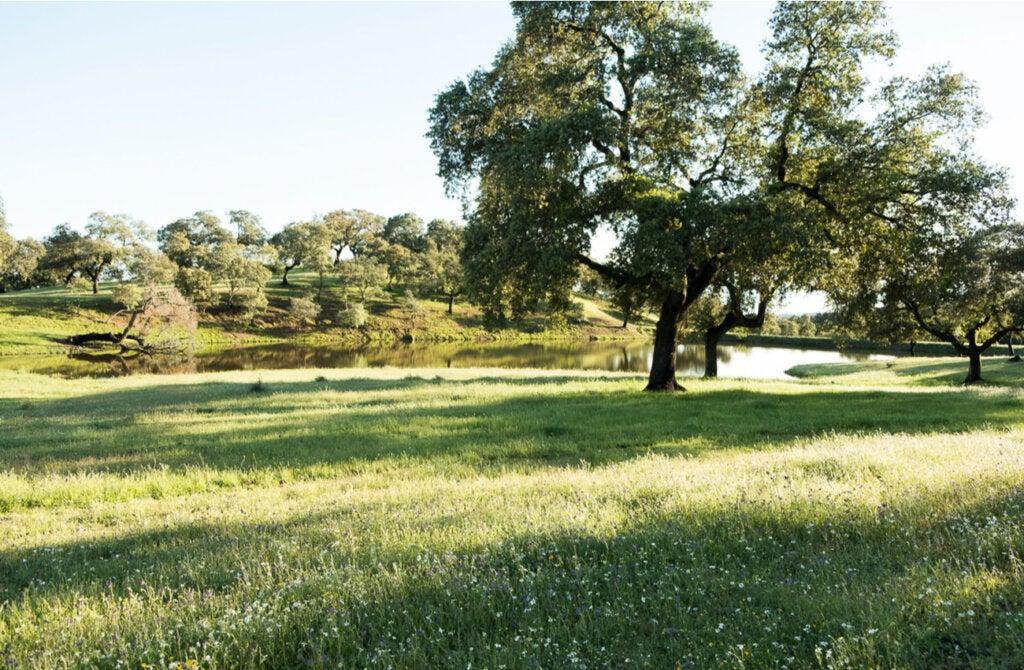 El paisaje de la Sierra Norte de Sevilla es fascinante en primavera.