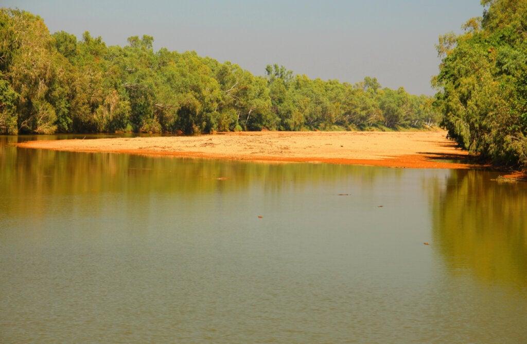 En los lagos del Parque Nacional Windjana Gorge habitan cocodrilos.