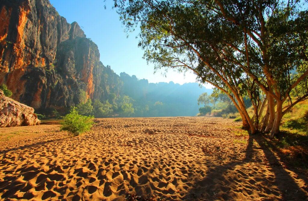 El Parque Nacional Windjana Gorge se caracteriza por su flora y fauna.