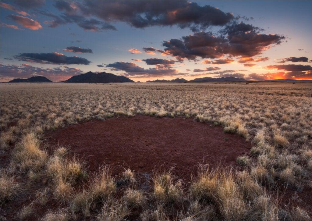 Algunos expertos creen que los círculos de hadas de Namibia se forman por la vegetación.