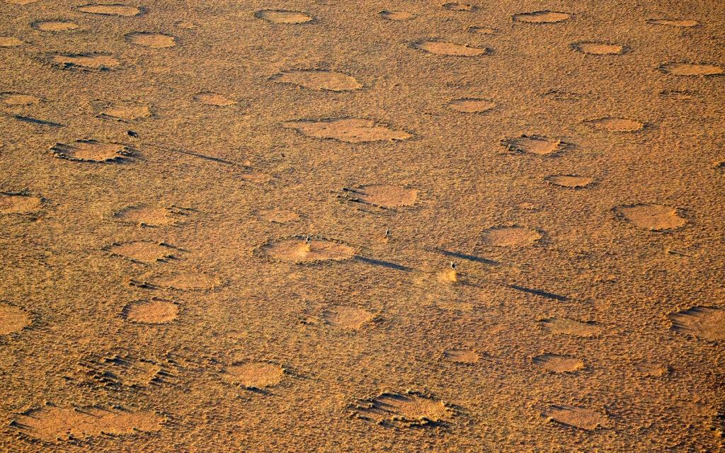 Los círculos de hadas de Namibia no han tenido explicación por mucho tiempo.