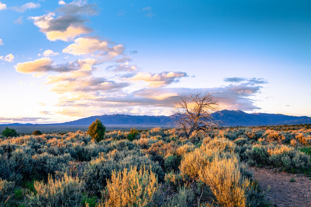 Muchos afirman que el zumbido de Taos proviene del desierto.