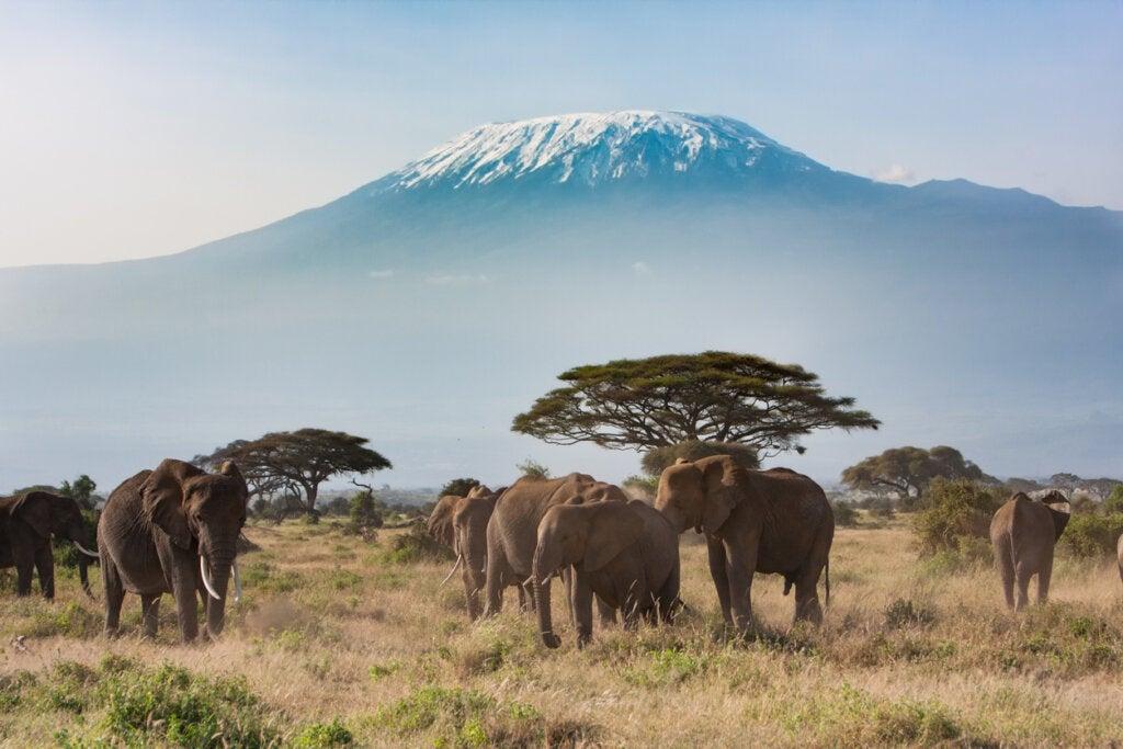 El Kilimanjaro es uno de los volcanes más impresionantes del mundo.