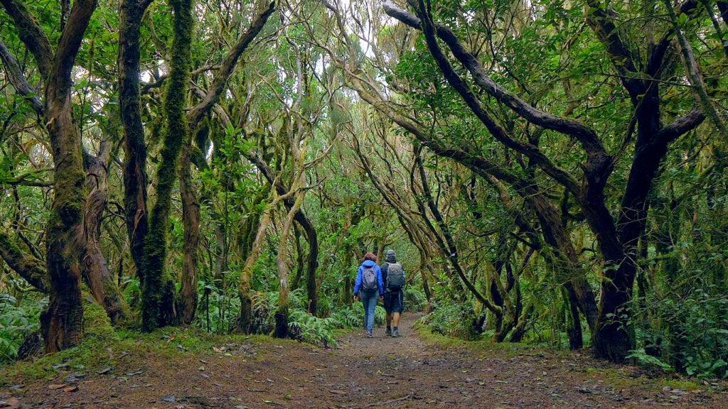 Las cumbres de Anaga han sido distinguidas por su biodiversidad.