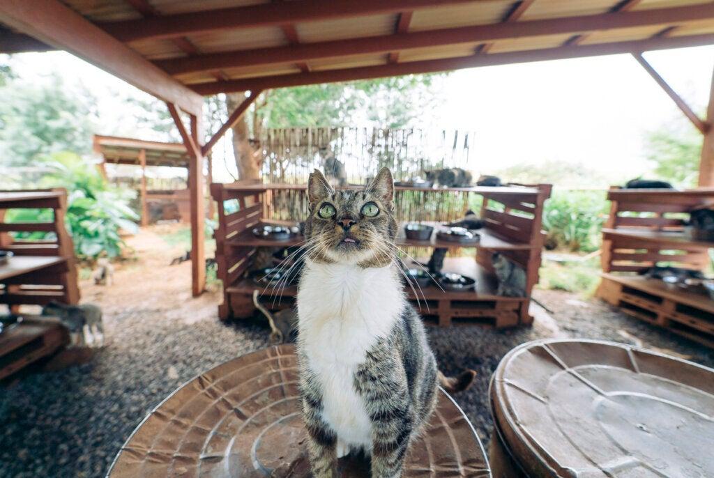 Aunque resulte extraño, el santuario de gatos es muy famoso en Lanai.