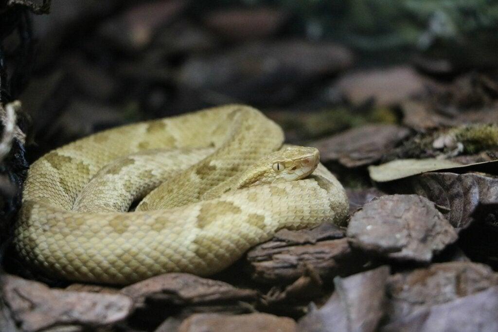 ¿Cuántas serpientes hay en la isla de las serpientes?