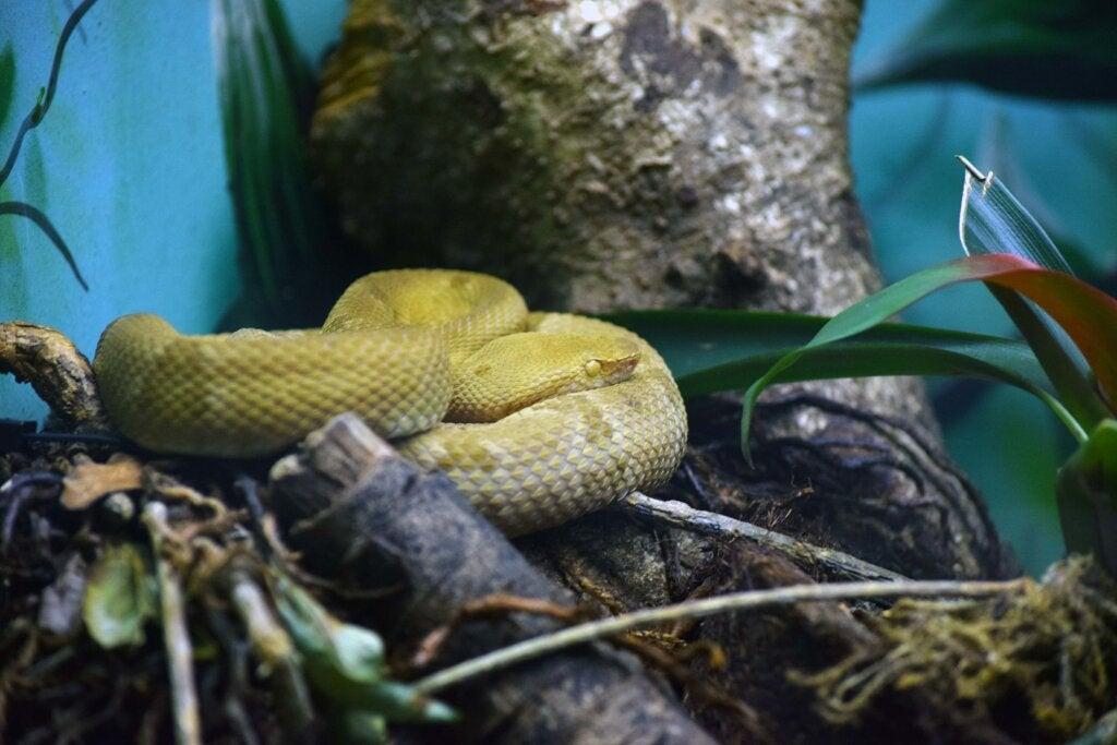 Historia y leyendas de la isla de las serpientes